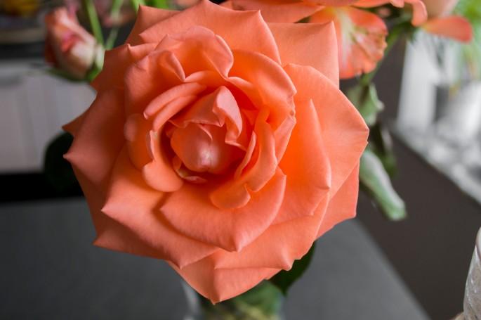 blommanb